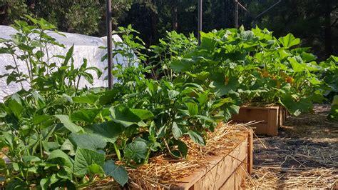 giardino sinergico i principi dell orto sinergico