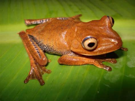 imagenes animales que respiran por la piel curiosidades anfibiosblog
