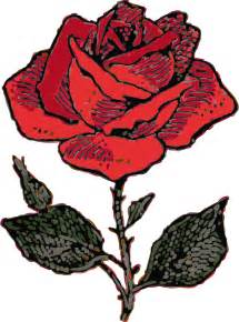 Photos Of Rose Flower - clipart rose