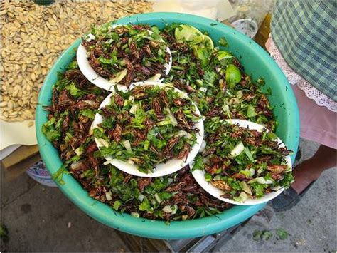 Would You Eat This Grasshopper Snack by How To Eat Grasshoppers World Cooking Firehow