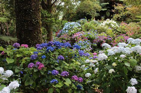 Secret Annabelle In Japan 12281a in the sun best hydrangeas to grow in sun espoma