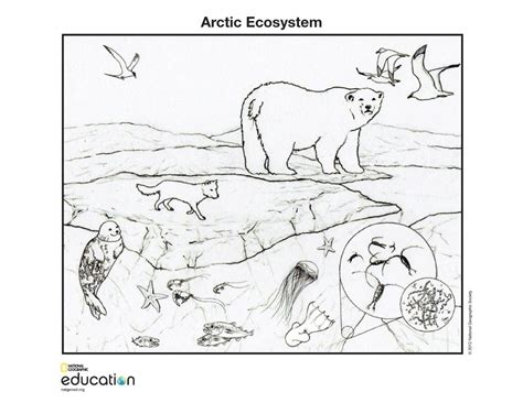 coloring pages of animals in their habitats arctic ecosystem national geographic education