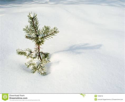 lonely christmas tree royalty free stock photos image
