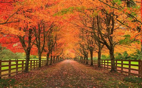 nature landscape fall leaves road fence trees grass