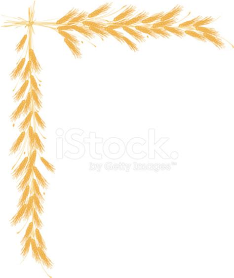 wheat border stock vector freeimages.com