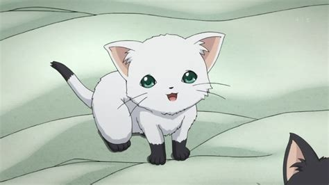 Anime Kitten by Anime White Cat Search Anime