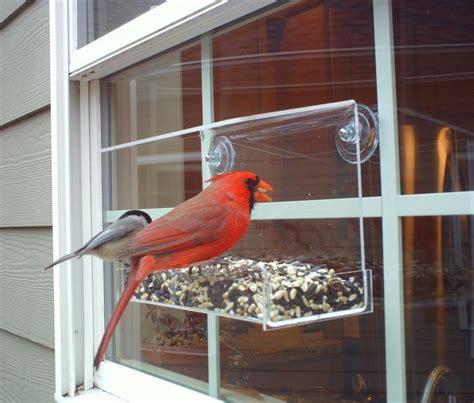 window bird feeder  jcs wildlife classic  acrylic