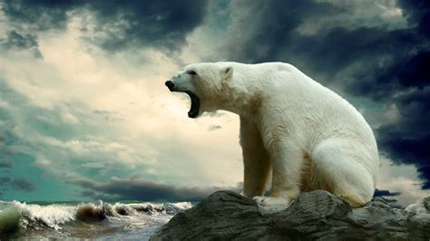 polar bear sea ice snow dark clouds open mouth hd