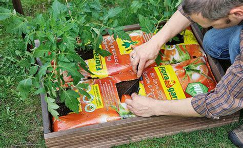 kartoffel gestell tomaten im garten anpflanzen die neueste innovation der