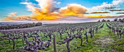 mclaren vale grape wine tourism association