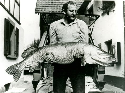 Pike County Pa Records Top 10 Pike World Records Of All Time Fish