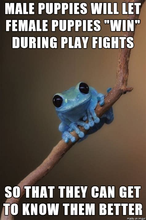 Fact Frog Meme - puppy love small fact frog meme guy