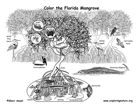mangrove tree coloring page mangrove coloring page