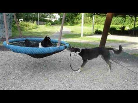 dog backyard playground dog playground youtube
