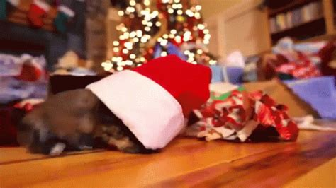 christmas puppy gif christmas puppy discover share gifs