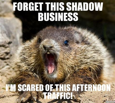 groundhog day jokes pictures the world s catalog of ideas