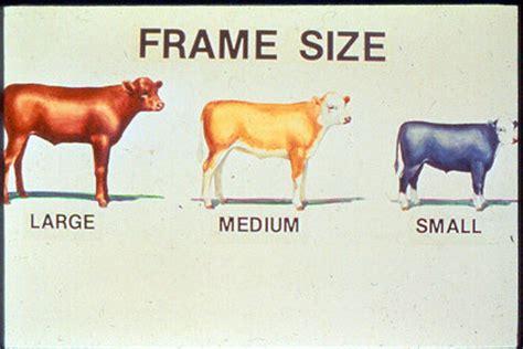 Feeder Cattle Grading feeder cattle grading