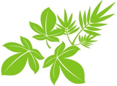 daun vector wallpaper daun pohon vektor vektor tanaman vektor gratis download gratis