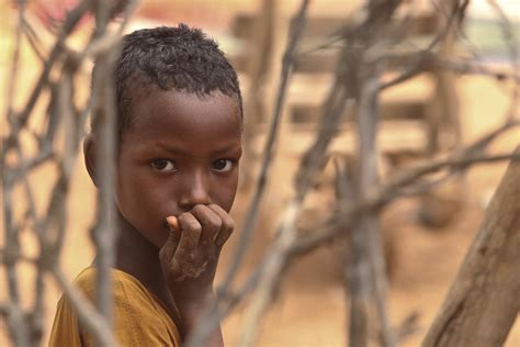a breed apart reflections of a refugee books perspectives of refugees on returning to somalia