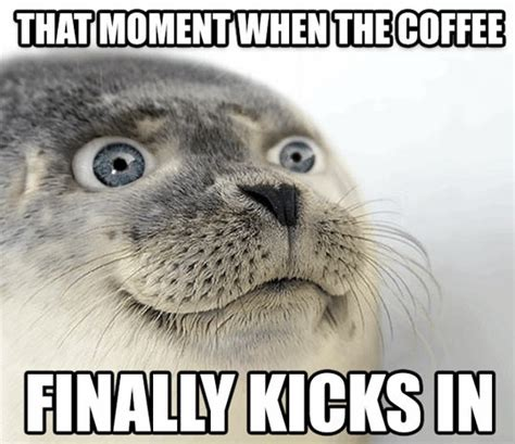 Seal Meme - coffee moment seal
