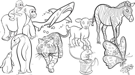 group of animals coloring page animal groups coloring free printable kids colouring