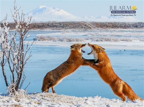 imagenes de la vida salvaje alaska