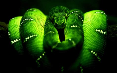 wallpaper green snake dark snake hd wallpaper animals wallpapers