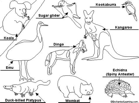 coloring page australian animals australia day colouring pages we celebrate anzac