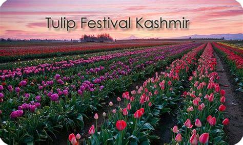 Travelocity Beautiful Kashmir India Tulip Flower Garden In India