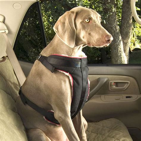 puppy seat belt seat belt harness seat get free image about wiring diagram