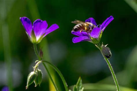 fiori prato 4 passi in val di sole primavera in fiore nel prato di