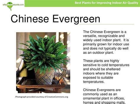 best plants for air quality best plants for improving indoor air quality