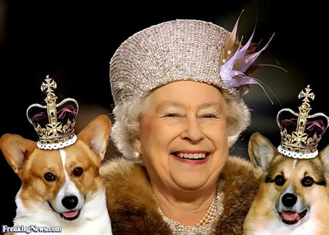 queen corgi queen elizabeth ii pictures freaking news