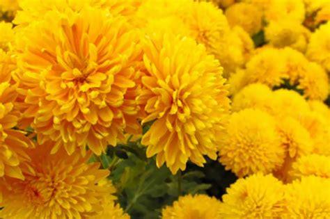 fiori recisi nomi quali fiori portare al cimitero in inverno