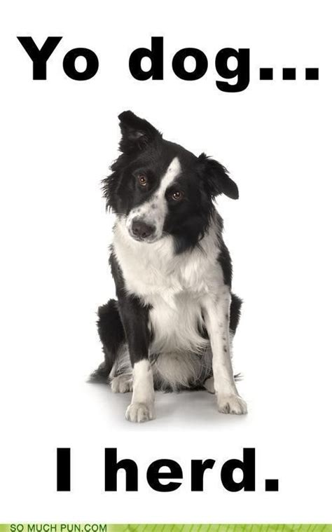 Border Collie Meme - pin by marisol rodriguez on border collie pinterest