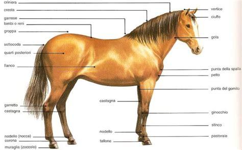 bocca di gabbia come 232 fatto un cavallo