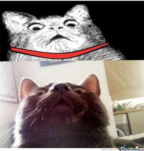 Surprised Cat Meme - surprised cat by liam91 meme center