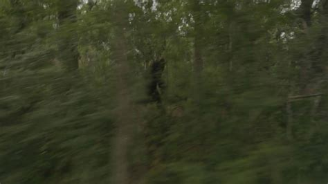 The Exists by Morbidly Amusing Found Footage Sasquatch Horror