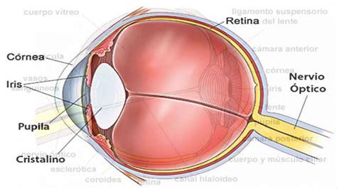 imagenes de los ojos y sus partes el ojo humano bien explicado youtube