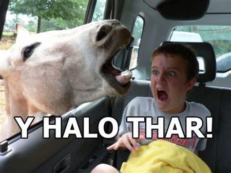 Hello Meme Funny - funny horse memes 13 pics