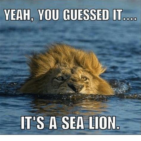 Lion Meme - 25 best memes about sea lions sea lions memes