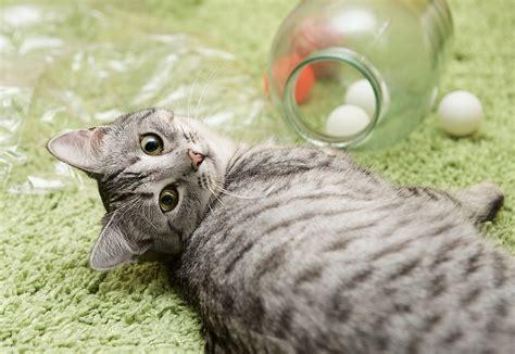 katzenspielzeug selber machen spielzeug fuer katzen basteln