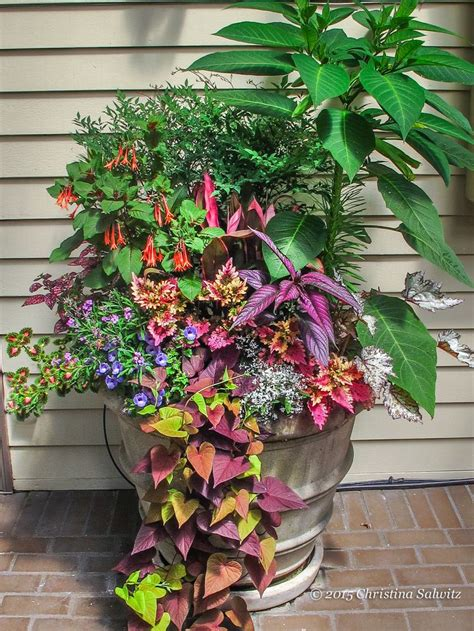 Potted Gardens Ideas 17 Best Images About Container Gardening Ideas On Pinterest Container Gardening Planters