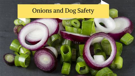 can dogs eat onions can dogs eat onions are they bad for them