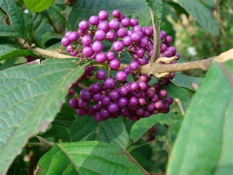 piante invernali da giardino piante invernali piante da giardino piante adatte all