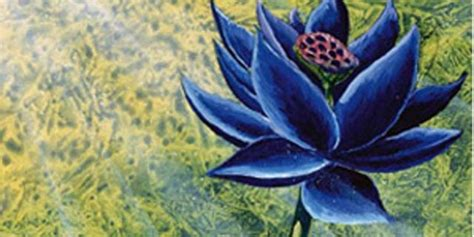 beta lotus beta black lotus images frompo 1
