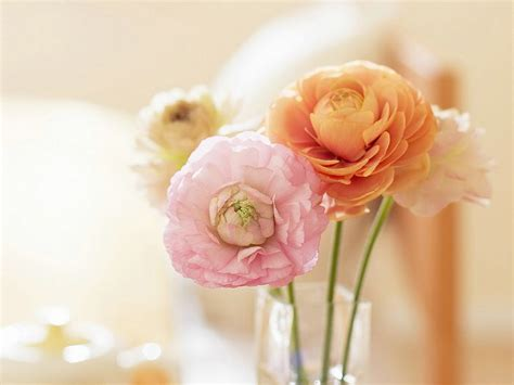 Decoration For Engagement Party At Home Ranunculus Flowers Elegant Ranunculus 8 Wallcoo Net