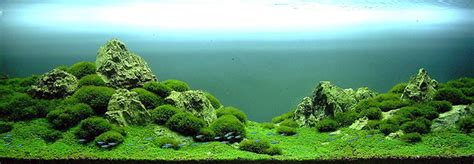 Aquascape Designs For Aquariums Takashi Amano And His Underwater Approach To Landscaping