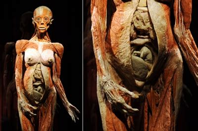 human bodies entradas entradas para human bodies taquilla