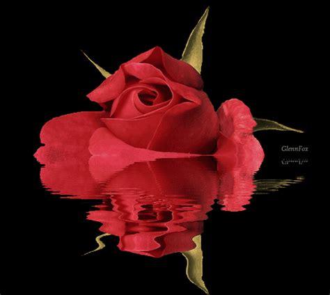 imágenes bellas en movimiento hermosas im 225 genes de rosas reflejadas en el agua